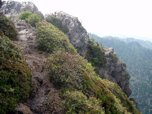Appalachian Trail Program OLYMPUS DIGITAL CAMERA